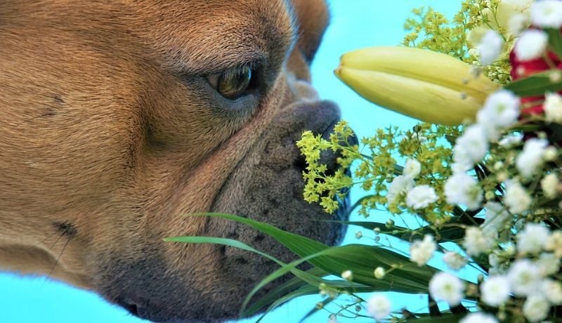 Treat dry dog's nose with natural ingredient