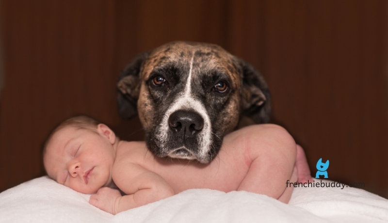 why dogs love babies