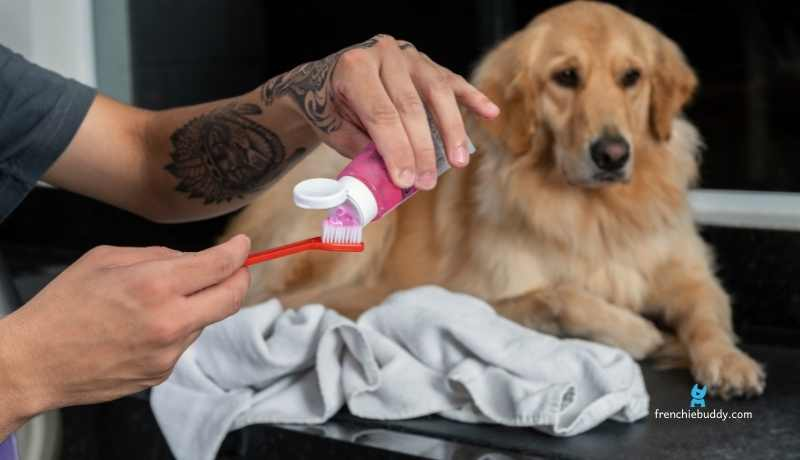 can toothpaste cause upset of dog's stomach